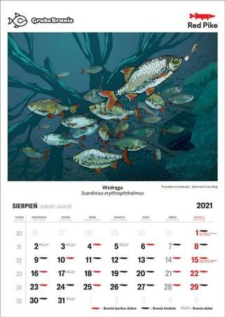 Prezent Koszulka Wędkarska Boleń + Kolorowe Skarpetki Wędkarskie + Kalendarz Brań 2021